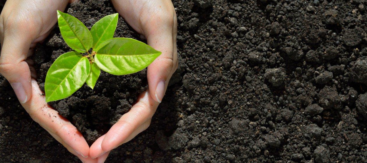 6 verduras para sembrar en verano y sus m ltiples beneficios for Arboles para plantar en verano