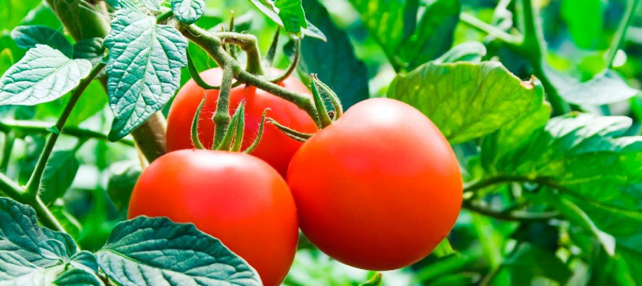 Diy 4 verduras f ciles de cultivar en casa Cultivar vegetales en casa
